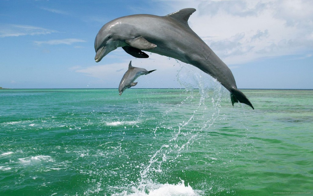 Dolphins-Jumping-HD-Wallpaper-Free-Download-5-1024x640